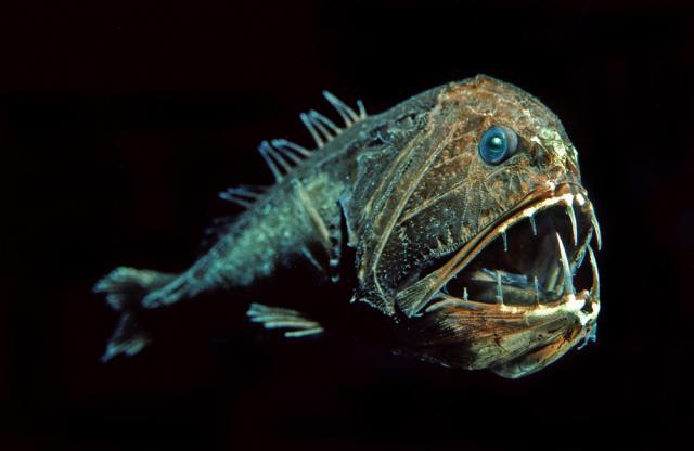 """""""Điểm danh"""" những loài cá kì lạ nhất đại dương - Ảnh 1"""