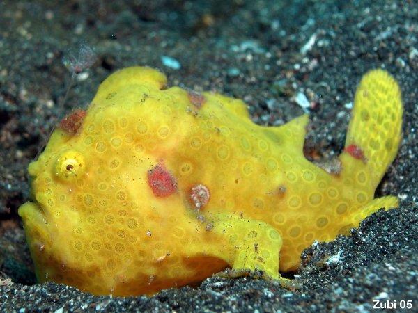 """""""Điểm danh"""" những loài cá kì lạ nhất đại dương - Ảnh 9"""