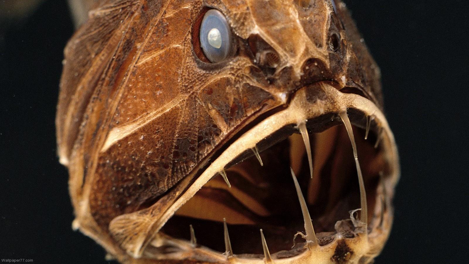 """""""Điểm danh"""" những loài cá kì lạ nhất đại dương - Ảnh 2"""