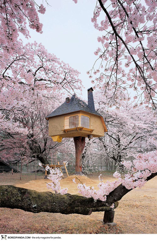 Ngắm những công trình kiến trúc 'vắt vẻo' trên cây cao - Ảnh 6