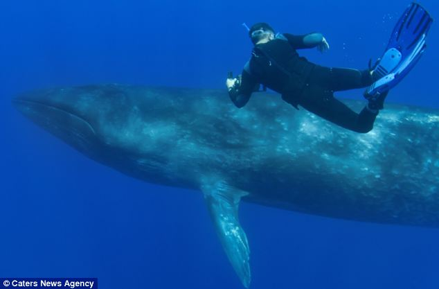 """Nín thở giây phút thợ lặn """"đối đầu"""" cá voi  - Ảnh 3"""