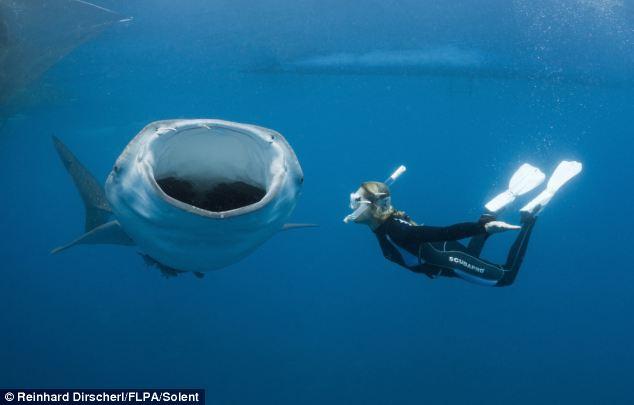 """Nín thở giây phút thợ lặn """"đối đầu"""" cá voi  - Ảnh 5"""