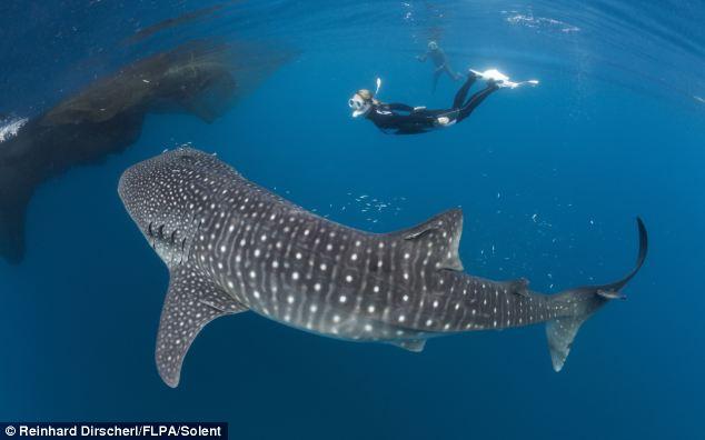 """Nín thở giây phút thợ lặn """"đối đầu"""" cá voi  - Ảnh 6"""