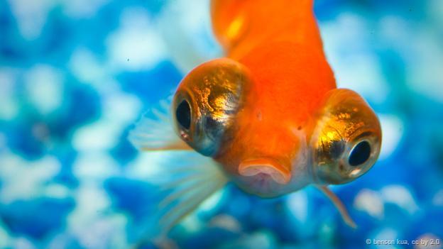 Khám phá 4 bí mật về loài cá cảnh - Ảnh 2