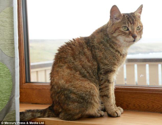 Hội ngộ chú mèo sau 11 năm mất tích - Ảnh 2