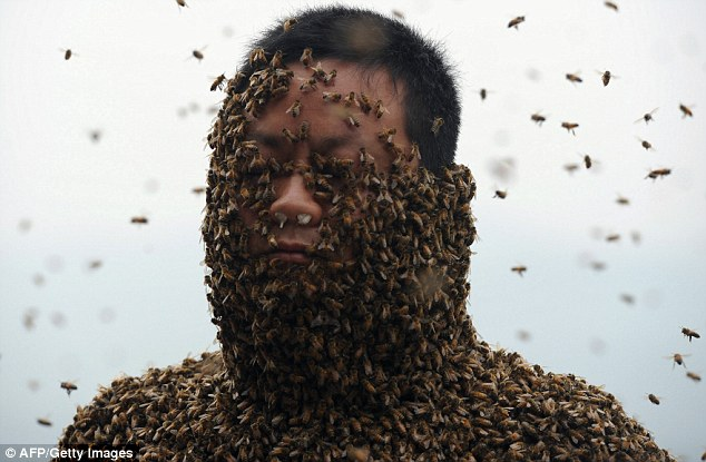 """Chuyện lạ: Người """"hút"""" gần nửa triệu con ong - Ảnh 1"""