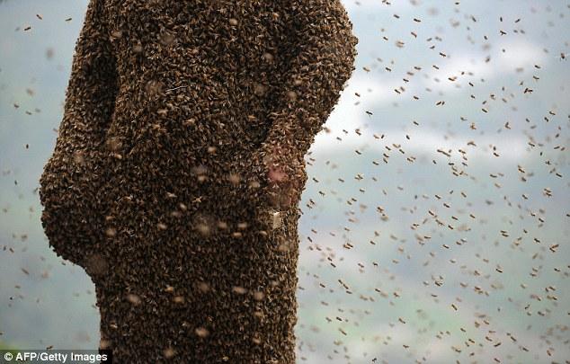 """Chuyện lạ: Người """"hút"""" gần nửa triệu con ong - Ảnh 4"""