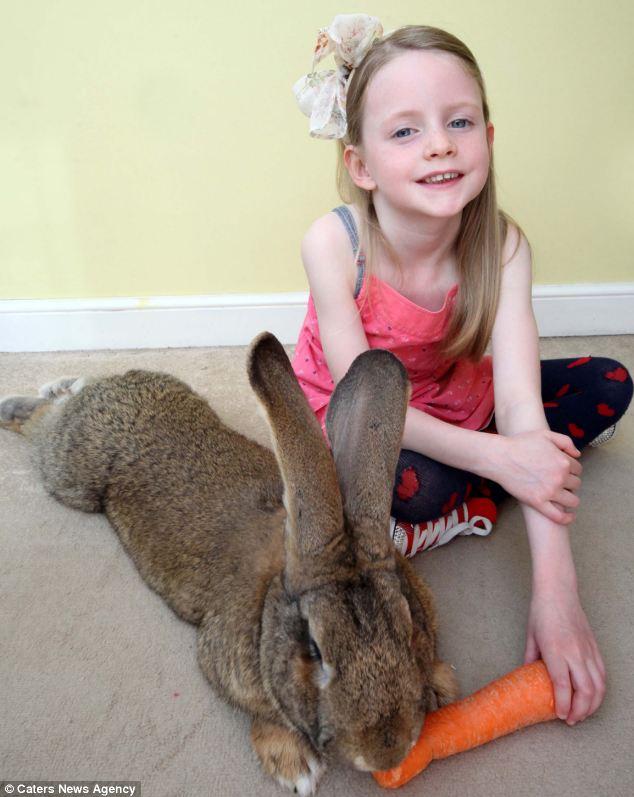 """""""Siêu thỏ"""" nặng trên 20 kg, dài hơn 1 mét - Ảnh 2"""