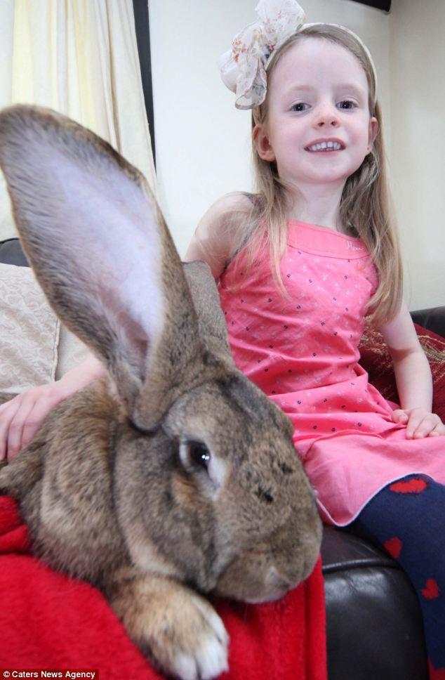"""""""Siêu thỏ"""" nặng trên 20 kg, dài hơn 1 mét - Ảnh 4"""