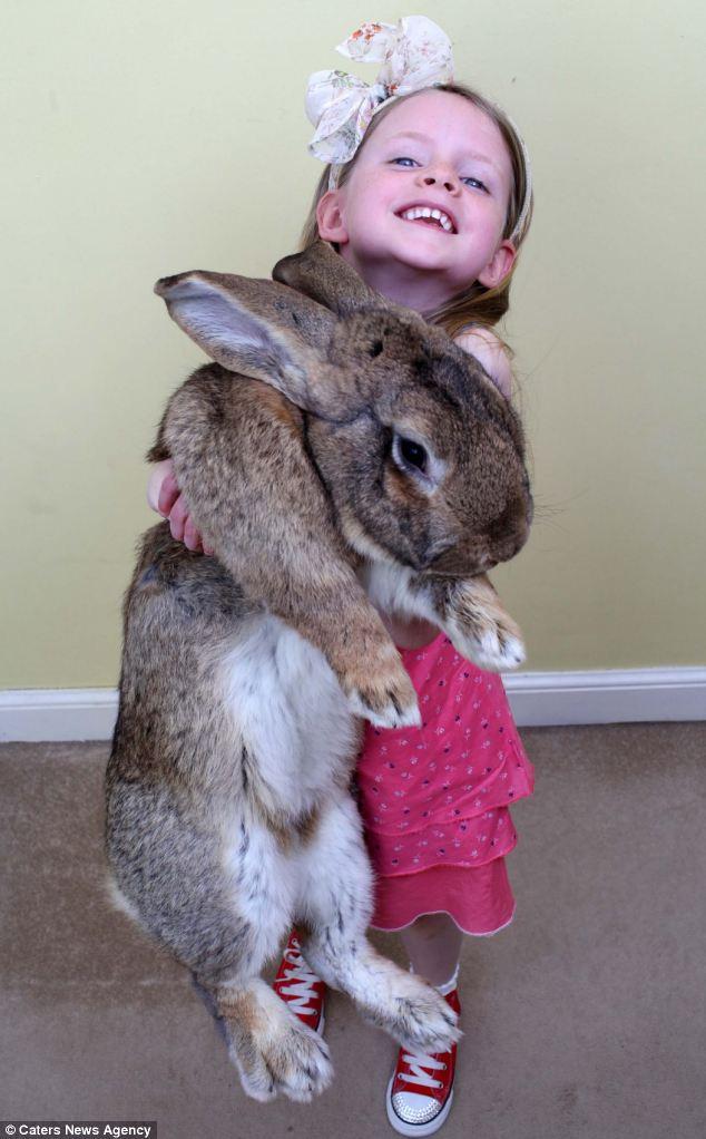 """""""Siêu thỏ"""" nặng trên 20 kg, dài hơn 1 mét - Ảnh 5"""