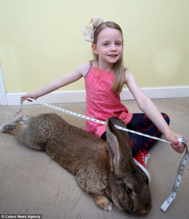 """""""Siêu thỏ"""" nặng trên 20 kg, dài hơn 1 mét - Ảnh 6"""