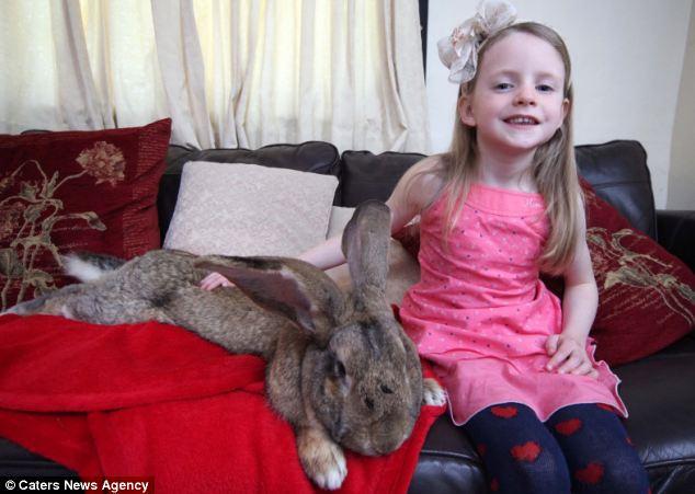 """""""Siêu thỏ"""" nặng trên 20 kg, dài hơn 1 mét - Ảnh 8"""