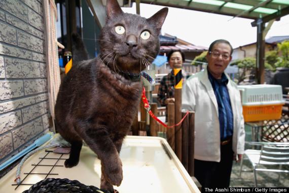 Chú mèo đoàn tụ với chủ sau 3 năm thảm họa sóng thần - Ảnh 1