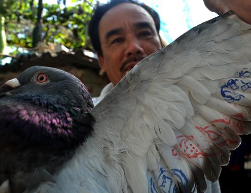 Ngư dân Lý Sơn bắt được chim có ký tự lạ ở Hoàng Sa - Ảnh 2