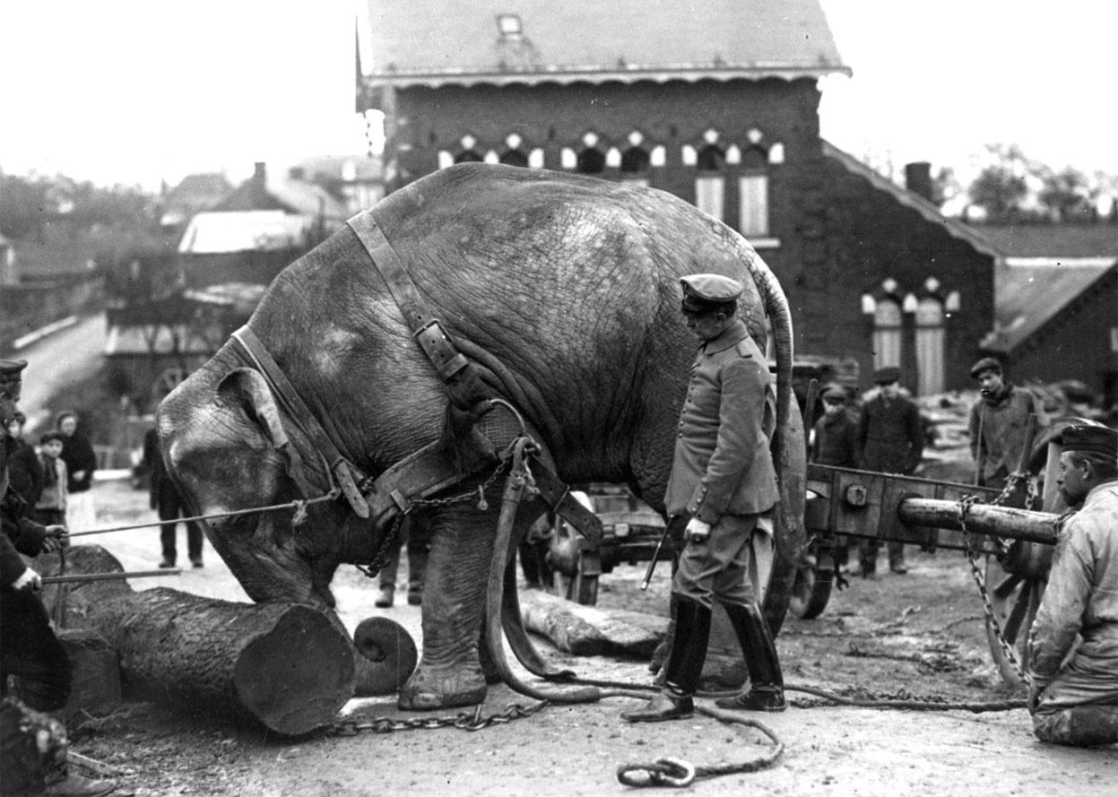 """Những """"chiến binh đặc biệt"""" trong Chiến tranh Thế giới thứ nhất - Ảnh 8"""