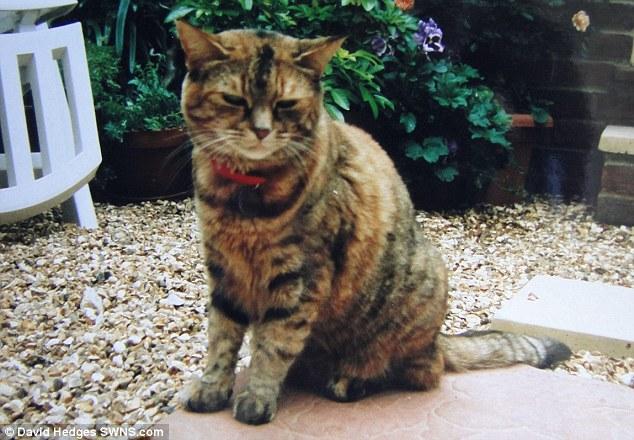 Chú mèo 24 tuổi giữ kỷ lục Guinness - Ảnh 2