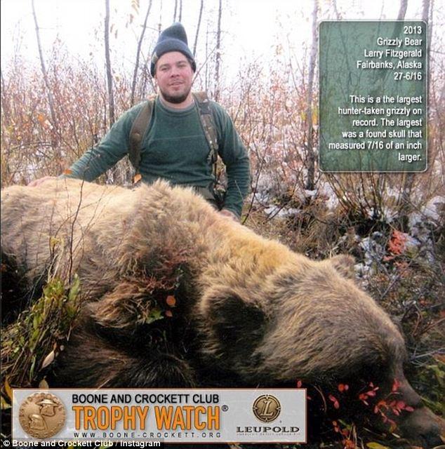 Cận cảnh thợ săn hạ gục gấu xám khổng lồ - Ảnh 1