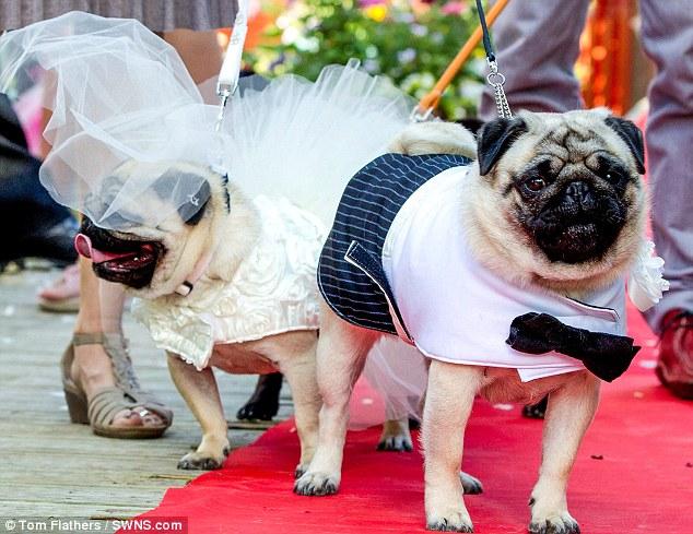 Chi 70 triệu tổ chức đám cưới cho… cún cưng - Ảnh 2