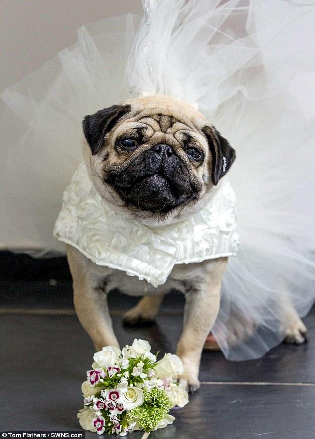 Chi 70 triệu tổ chức đám cưới cho… cún cưng - Ảnh 3