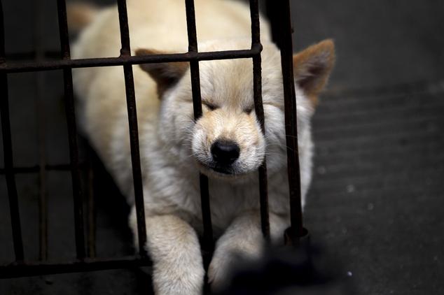Hãi hùng lễ hội thịt chó ở Trung Quốc - Ảnh 2