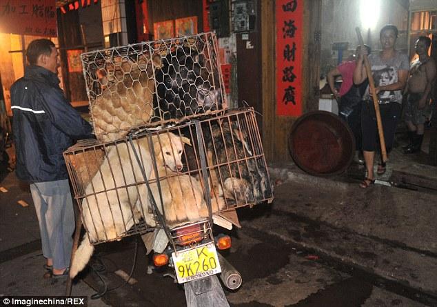 Hãi hùng lễ hội thịt chó ở Trung Quốc - Ảnh 4