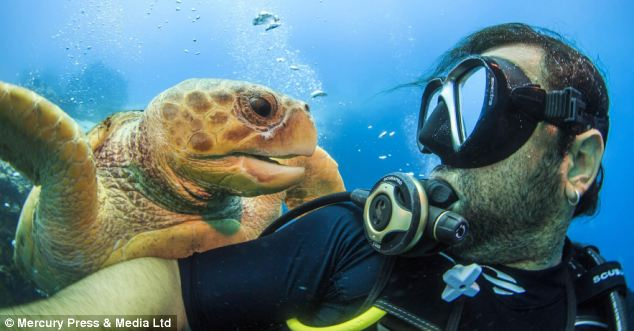 """Ảnh """"độc"""" rùa hiếm tạo dáng cùng thợ lặn - Ảnh 1"""