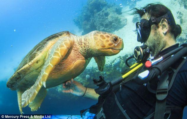 """Ảnh """"độc"""" rùa hiếm tạo dáng cùng thợ lặn - Ảnh 2"""