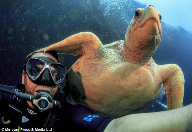 """Ảnh """"độc"""" rùa hiếm tạo dáng cùng thợ lặn - Ảnh 4"""