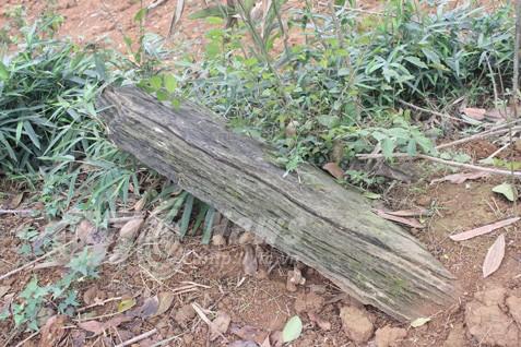 Nghĩa địa bí ẩn chôn những người bị hổ vồ bên sông Mã - Ảnh 3