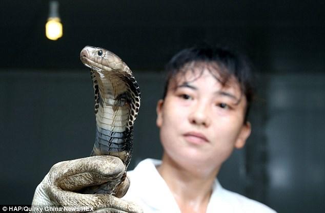 Bị cắn nhiều lần nhưng vẫn quyết nuôi 30.000 con rắn hổ mang - Ảnh 1