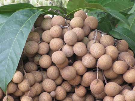 Cẩn trọng các loại trái cây, thảo dược dễ khiến bà bầu sảy thai - Ảnh 3