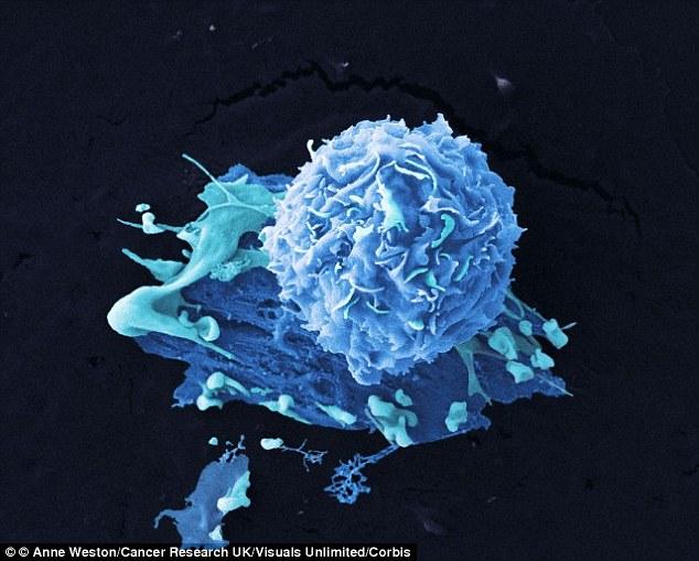 Cảnh báo thành phần có thể gây ung thư vú trong đậu phụ - Ảnh 2