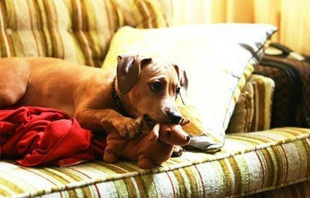 Ảnh vui: Khi thú cưng cũng khoái... thú bông - Ảnh 13