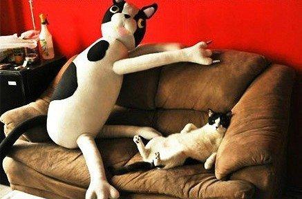 Ảnh vui: Khi thú cưng cũng khoái... thú bông - Ảnh 14