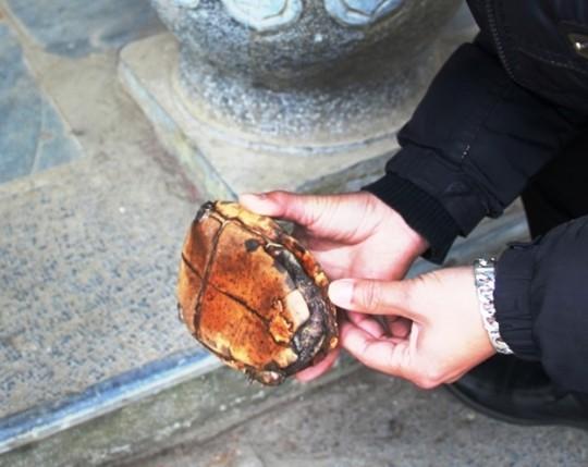 Rùa vàng ở suối cá thần được trả giá nửa tỷ - Ảnh 2