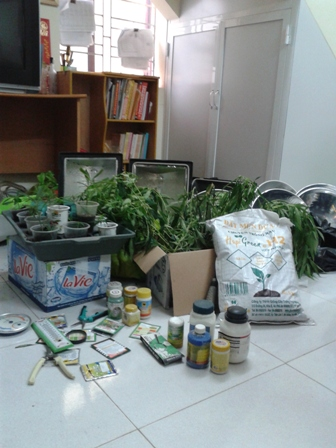 Kẻ trồng cần sa trong nhà từng là sinh viên Đại học Luật - Ảnh 2