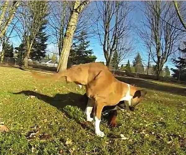Nghị lực phi thường của chú chó hai chân làm tan chảy trái tim dân mạng - Ảnh 1