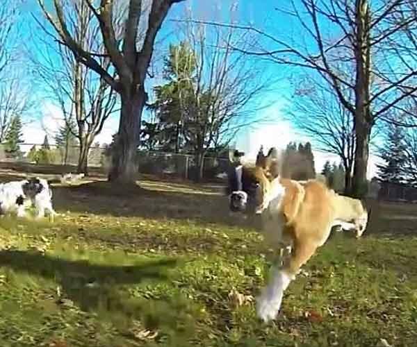 Nghị lực phi thường của chú chó hai chân làm tan chảy trái tim dân mạng - Ảnh 2