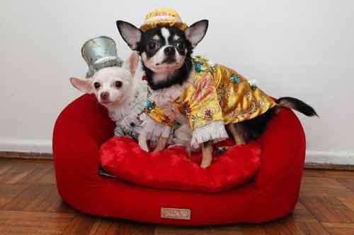 Những kiểu thời trang chó cực kỳ dễ thương - Ảnh 1