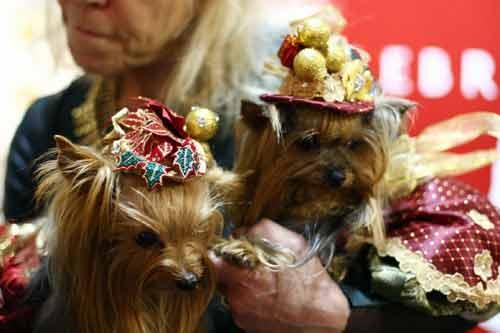 Những kiểu thời trang chó cực kỳ dễ thương - Ảnh 4
