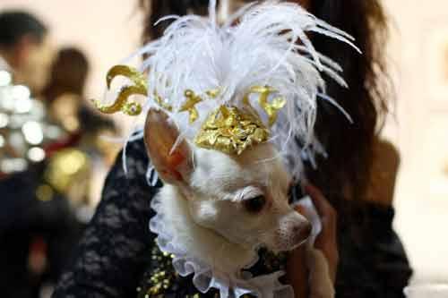 Những kiểu thời trang chó cực kỳ dễ thương - Ảnh 5