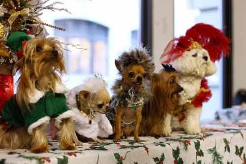 Những kiểu thời trang chó cực kỳ dễ thương - Ảnh 7
