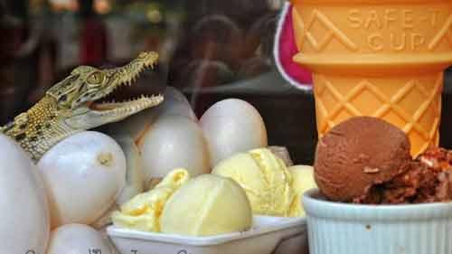 Độc đáo món kem làm từ trứng cá sấu - Ảnh 1
