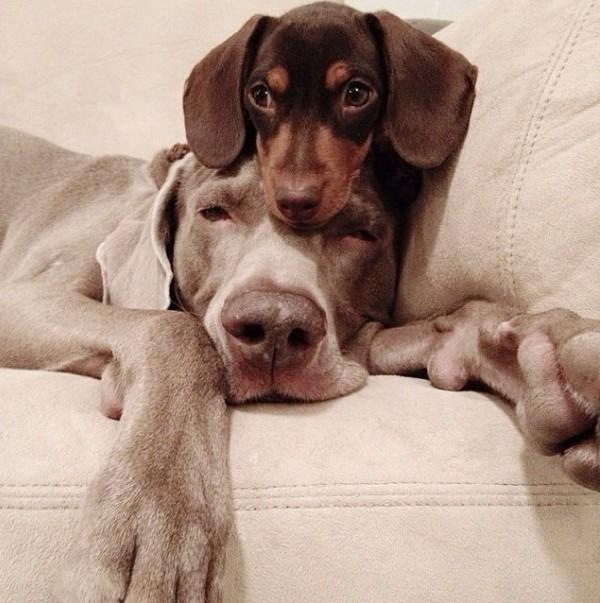 """Thú vị bộ ảnh """"Chúng mình cùng chơi"""" của cặp cún cưng - Ảnh 6"""
