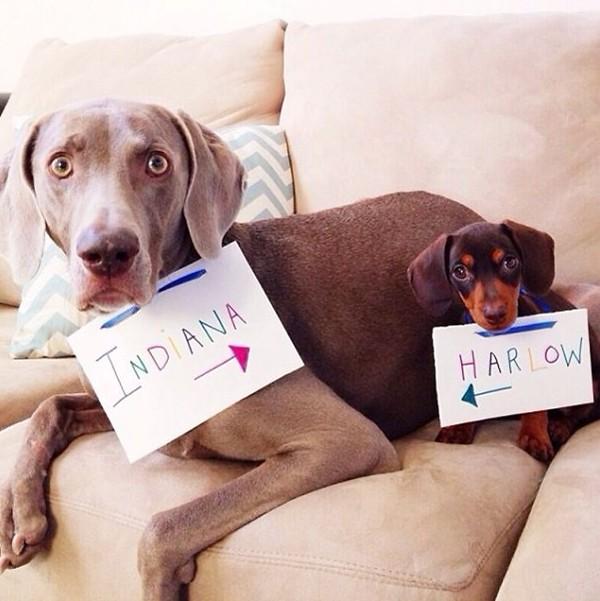 """Thú vị bộ ảnh """"Chúng mình cùng chơi"""" của cặp cún cưng - Ảnh 1"""