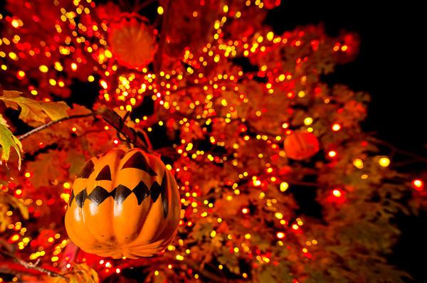 Halloween với những trái bí ngô kỳ bí, huyền ảo - Ảnh 9