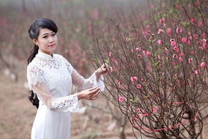 """Ngất ngây thiếu nữ Hà thành """"đọ sắc"""" bên vườn đào Nhật Tân - Ảnh 1"""