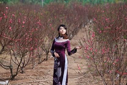 """Ngất ngây thiếu nữ Hà thành """"đọ sắc"""" bên vườn đào Nhật Tân - Ảnh 5"""