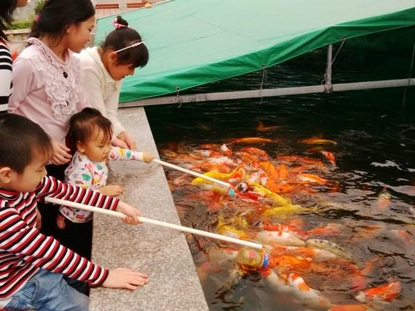 """Cá """"bú bình"""" đã xuất hiện ở Việt Nam - Ảnh 1"""