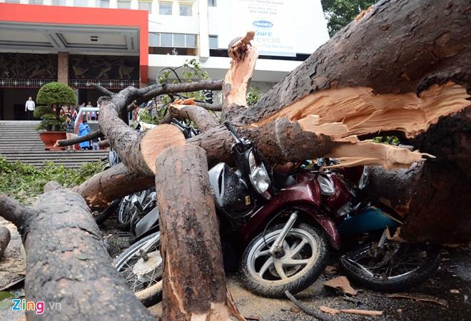 Hàng loạt cổ thụ ở Sài Gòn bật gốc đè bẹp ôtô, xe máy - Ảnh 8